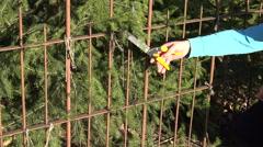 Gardener cut small fir branch with garden secateurs. 4K Stock Footage