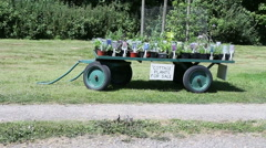 Cart with flowers for sale Stock Footage