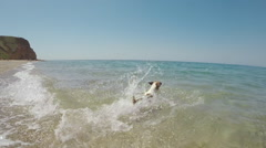 Dog Jack Russell running in the sea by a stone and floating, slow motion gopro Stock Footage