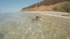 Purebred puppy Jack Russell swims in the sea in summe, gopro Stock Footage