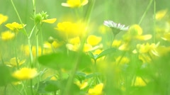 Meadow (tall grass and yellow flowers) - detail Stock Footage
