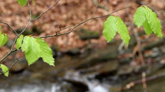 Plants on the background of moving water Stock Footage