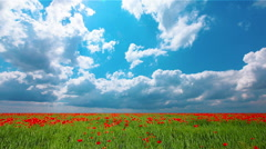 Field of red poppies and cloudy sky Stock Footage