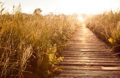 Old wooden boardwalk and morass Kuvituskuvat
