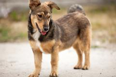 street Small dog - stock photo