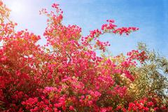 Azalea flower Stock Photos