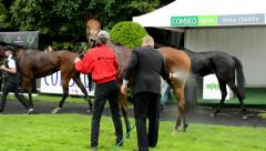 After race horses walk around (breathing space) - worker washes horses Stock Footage