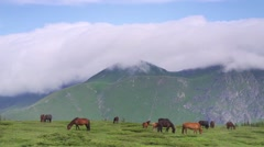 Horses mountain meadow high in the mountains with rocky peaks background Stock Footage