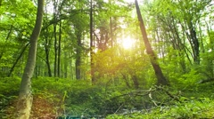 Forest - backlite sun with nice lensflare - stock footage