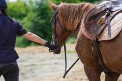 Horserider on the arena Stock Photos