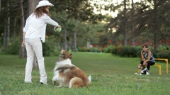 Coach coaches collie dog Stock Footage