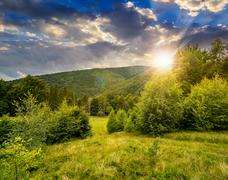 forest glade on hillside at sunset - stock photo