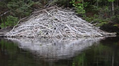 Beaver lodge, smooth view from boat Stock Footage