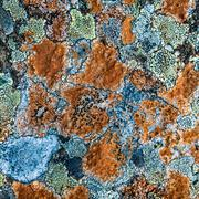 Multicolored Lichen Stock Photos