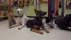 Dogs in store super slow motion goofing around Stock Footage