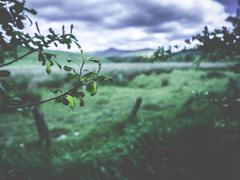 Rural Scene With Stormy Sky Stock Photos