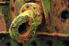 Algae on Shipwreck - stock photo