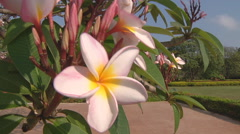 Flowers at the Royal Palace complex in Phnom Penh, Cambodia Stock Footage