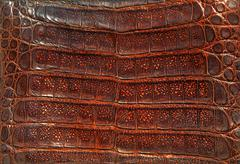 Alligator leather Kuvituskuvat