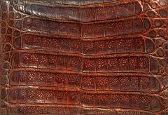 Alligator leather - stock photo