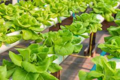 Organic hydroponic vegetable cultivation farm Stock Photos