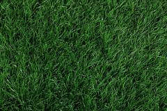 Green grass seamless texture. Seamless in only horizontal dimens - stock photo