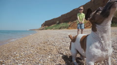 Funny Jack Russell caught in jump stones near the sea walking with a child Stock Footage