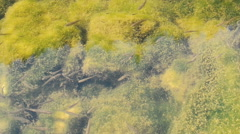 Fish Swimming in a River in a School Stock Footage