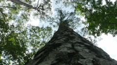 3826 Looking Straight Up at Tree, 4K Stock Footage