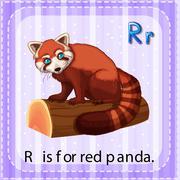 Red panda Stock Illustration