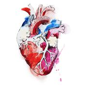 Watercolor human heart - stock illustration