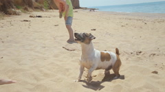 Dog Jack Russell plays with a stone near the sea Stock Footage