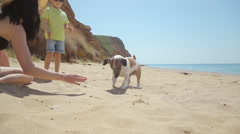 Vigorous dog breed Jack Russell plays in the sand with a stone near the sea Stock Footage