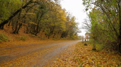 Deserted Road In Autumn Forest Covered With Yellow Leaves - stock footage