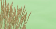 Upper And Right Part, Bush of Stalks of Apera, Windgrass, Weed is Fluttering Stock Footage