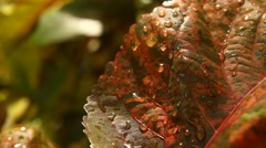 Water drops on leafs Stock Footage