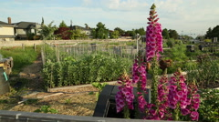 Dolly shot Residential Community Garden Stock Footage