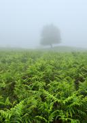 Solitary tree with fog Stock Photos