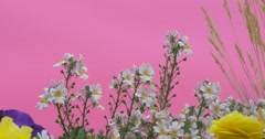 Flowerbed With Blue Petunia, Yellow Flowers, Apera, Windgrass. White Flowers Stock Footage