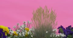Flowerbed With Blue Petunia, Yellow Flowers, White Flowers, Apera, Windgrass Stock Footage
