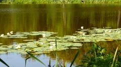 Swamp with water lily and forest reflection dolly shot Stock Footage