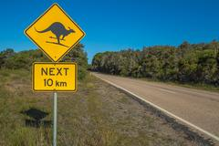 Kangaroo Skiing - stock photo