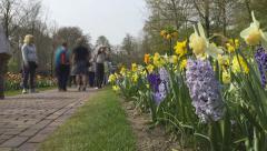 Flower park Keukenhof in Netherlands Stock Footage