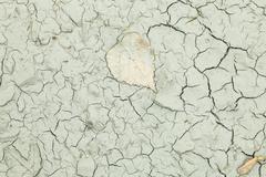 Stock Photo of Dry terrain texture