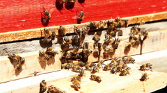 Working bees in honeycombs. Beekeeping Stock Footage