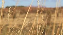 Outback Australia Landscape Red Desert Sand and Dry Arid Grasslands Stock Footage