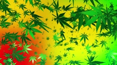 Flying cannabis leaves on multicolored background Stock Footage