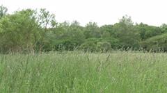 Forrest field waving long grass 4K ULTRA HD Stock Footage