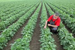 Farmer or agronomist in soy field - stock photo