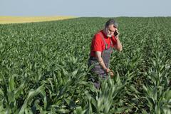 Agricultural scene, farmer in corn field Kuvituskuvat
